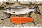 image-saumon-sauvage-poisson