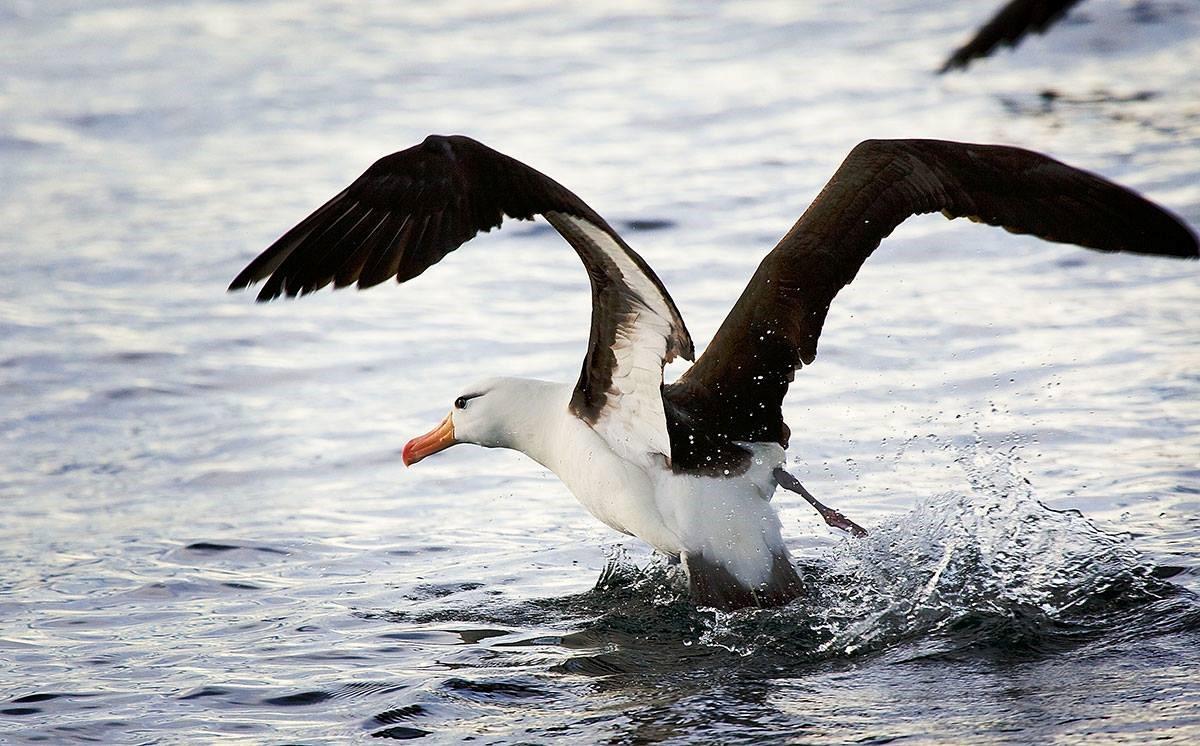 albatros-eau