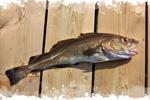 image-cabillaud-norvege-poisson