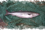 image-colin-lieu-poisson