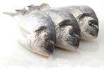 image-daurade-bio-poisson