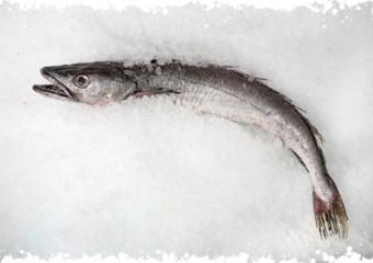 Surgélation du poisson et santé