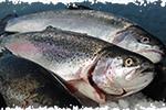 image-truite-bio-poisson