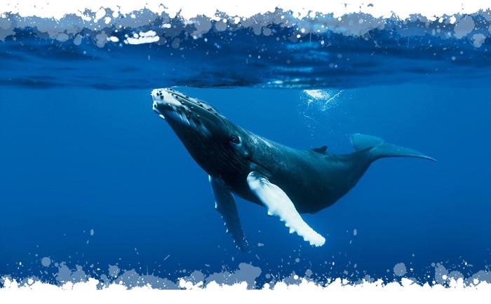 oceans-une-baleine-700x434